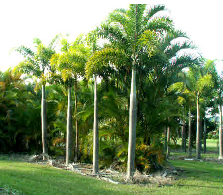 Many palms & specimen trees