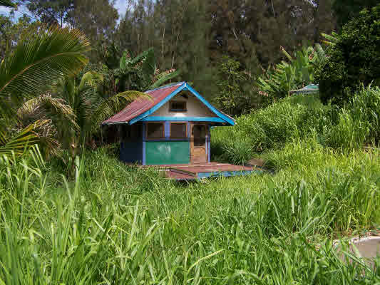 Hawaii Homesteads - Homesteading Questions