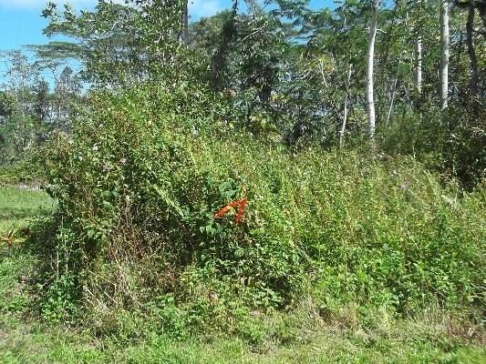MAUNA KEA RD, Pahoa, HI 96778