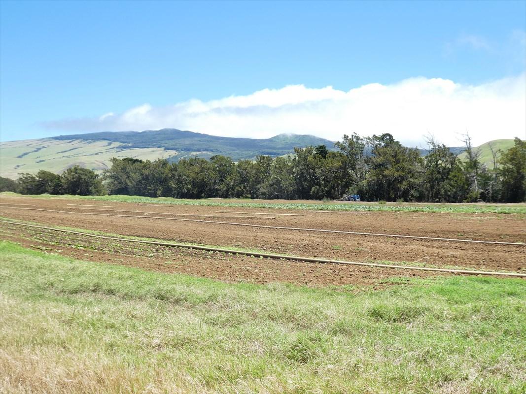 66-1311 LALAMILO FARM ROAD, KAMUELA, HI 96743